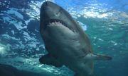 Phát hiện các phần thi thể người trong bụng cá mập ở Ấn Độ Dương, nghi liên quan tới vụ mất tích bí ẩn