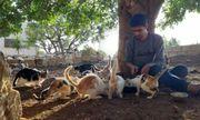 Thị trấn ở Syria, nơi mèo đông hơn người