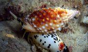 Quảng Bình: 1 người chết, 7 người nguy kịch nghi do ăn ốc biển