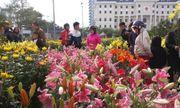 Điểm danh những loại hoa, cây cảnh chứa chất cực độc cần cẩn thận ngày Tết