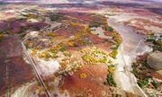 Video: Cận cảnh loài cây thân gỗ duy nhất trên sa mạc Hoa Bắc