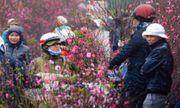 Thời tiết Tết nguyên đán Canh Tý 2020: Hà Nội mưa rét