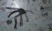 Muỗi khổng lồ lớn gấp 20 lần muỗi thường bay qua cửa sổ nhà dân khiến gia chủ hoảng sợ