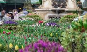 """Phiêu bồng xứ hoa Bà Nà, """"sống ảo"""" cùng 1,5 triệu bông tulip và hơn thế nữa"""