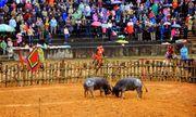 Bộ Văn hóa: Có thể tạm ngừng tổ chức lễ hội để phòng chống virus corona