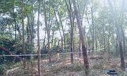 Bình Dương: Phát hiện thi thể nam giới đang phân hủy trong rừng cao su