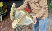 Chủ nhà hàng tại Nghệ An mua rùa quý hiếm thả về biển