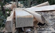 Điều tra làm rõ vụ 12 cây gỗ quý bị