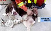 Chó dũng cảm cứu 6 người mắc kẹt do sập khách sạn cách ly