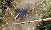 Người đàn ông tử vong bất thường khi đánh cá bằng kích điện ở rừng U Minh