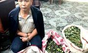 Thanh Hóa: Khởi tố người đàn ông vận chuyển hơn 50kg quả thuốc phiện tươi đi bán kiếm lời