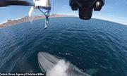 Video: Đang bay ngoài khơi, drone đột ngột chao đảo vì bị cá voi xanh phun nước bất ngờ