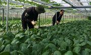 Những bó rau trọn yêu thương từ biên giới gửi về người dân cách ly tại thủ đô Hà Nội