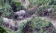 Lần đầu phát hiện cá thể voi con khoảng 1 tuổi tại Quảng Nam
