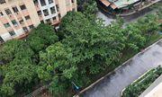 Nam bộ, TP.HCM bất ngờ đón mưa rào giải nhiệt sau buổi sáng nóng bức
