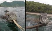 Khoảnh khắc kinh hoàng khi đối mặt với 2 con rồng Komodo khổng lồ ở ngoài khơi