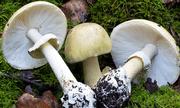 Ngộ độc nấm rừng, 4 người trong cùng gia đình phải nhâp viện cấp cứu