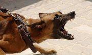 Nghệ An: Bé trai 7 tuổi tử vong, con chó nghi bị dại cắn nạn nhân mất tích