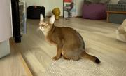 """Video: Thích thú xem chú mèo mê mẩn chơi trò """"nổ bong bóng"""""""
