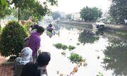 Kinh hãi phát hiện thi thể đang phân hủy lẫn trong đám lục bình trôi trên sông