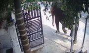 Người đàn ông tử vong vì bị voi nhà bất ngờ tấn công