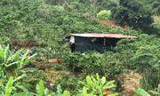 Lâm Đồng: Triệt phá tụ điểm đá gà trên rẫy cà phê