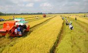 Đại biểu Quốc hội đồng tình với chủ trương miễn thuế đất nông nghiệp, giảm gánh nặng cho nông dân