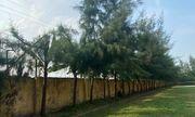 Học sinh lớp 9 ở Hải Dương tử vong do điện giật trong khi lao động tại trường