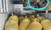 Cà Mau: Bắt giữ ô tải chở lậu 1,3 tấn thủy sản quý hiếm