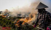 Nông dân đốt rơm rạ: Thực trạng nhức nhối vẫn vẫn chưa có giải pháp hữu hiệu