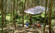 Vụ bé 5 tuổi tử vong trong nhà hoang ở Nghệ An: Triệu tập thêm một nam sinh lớp 11