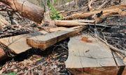 Gia Lai: Tạm giữ 6 đối tượng để điều tra vụ phá rừng, khai thác trái phép 103m3 gỗ