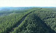 Video: Trung Quốc kỳ công trồng 93.000 hecta rừng bảo vệ Bắc Kinh trước bão cát