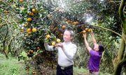 Tậu nhà lầu, xe hơi từ trồng cam, cả làng nhan nhản tỷ phú
