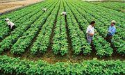 Cán bộ, công chức có được mua đất nông nghiệp không?