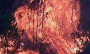 Vụ cháy rừng ở Nghệ An: Triệu tập một phụ nữ để điều tra