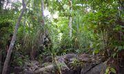 Kinh hãi phát hiện thi thể đang phân hủy mạnh trong rừng già