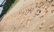 Video : Hàng nghìn chiếc chân giò lợn dạt vào bờ biển Trung Quốc không rõ nguyên nhân