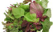 """Loại rau """"trường thọ"""" tốt cho sức khỏe mọc hoang đầy vườn, không phải ai cũng biết"""