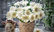 Mẹ trẻ Hà thành gây sốt với trào lưu cắm hoa bằng giỏ cói đẹp mê hồn
