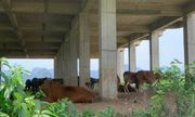Cận cảnh dự án đại học Hoa Lư hơn 400 tỷ đồng cả thập kỷ vẫn bỏ hoang, thành nơi chăn bò, đổ phế thải