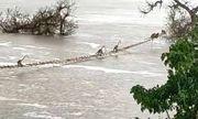 Video: Đàn khỉ hơn 50 con vắt vẻo đu thang dây để qua sông sau mưa lớn