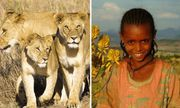 Thực hư việc sư tử cứu bé gái bị bắt cóc ở Ethiopia