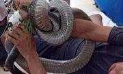Bị rắn hổ mang chúa dài 3m cắn, người đàn ông quấn