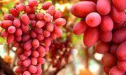 7 loại thực phẩm giúp bổ thận, ngừa ung thư, càng ăn càng khỏe