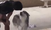 Video: Lần đầu đi bơi, chú chó Husky có phản ứng đặc biệt khiến dân mạng cười bò