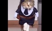 Video: Chú mèo catwalk quá thần thái khiến dân mạng trầm trồ ngưỡng mộ