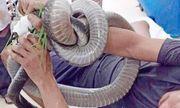 Vụ mang rắn hổ mang chúa