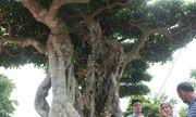 Siêu cây