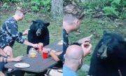 """Video: Chú gấu hồn nhiên tới xin ăn, ngồi """"nhậu"""" như thành viên trong gia đình"""